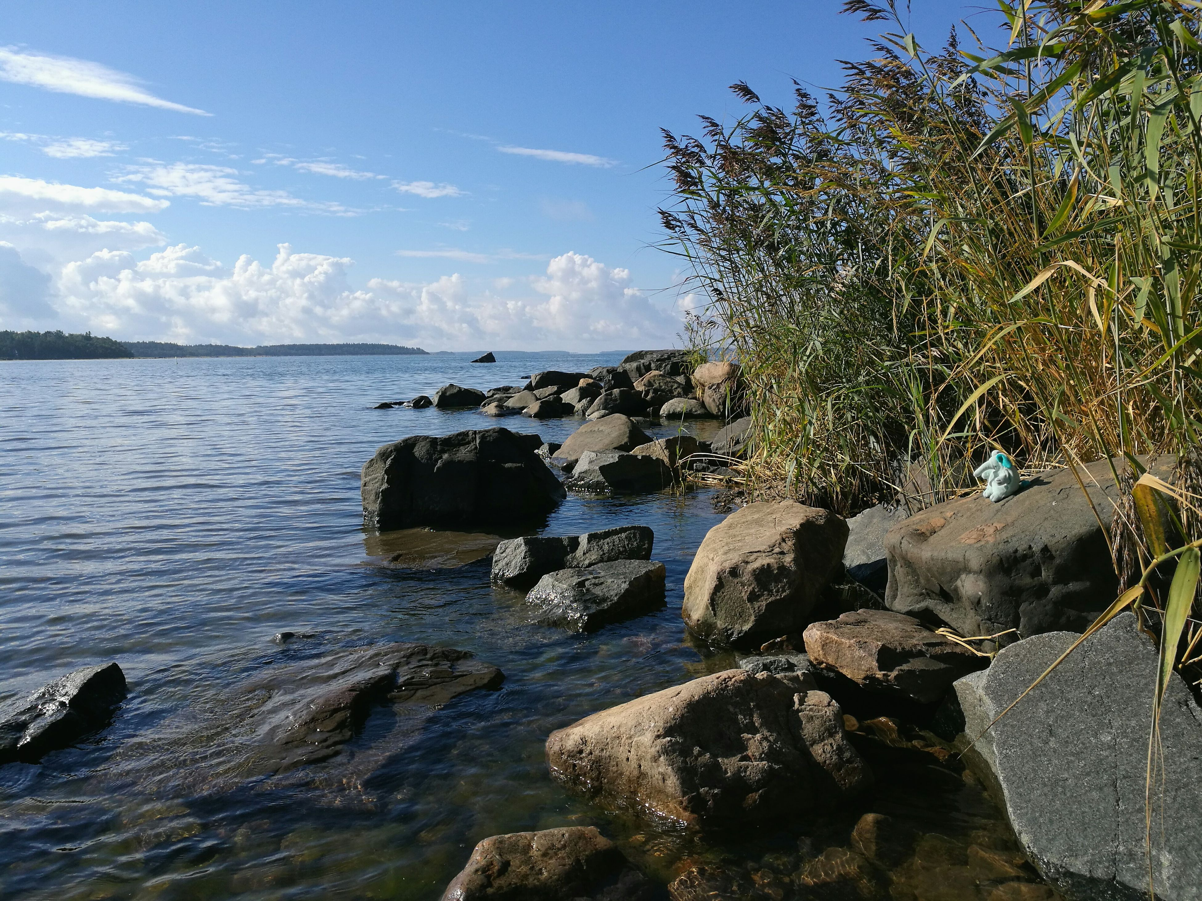 sea, water, nature, scenics, beauty in nature, sky, outdoors, no people, horizon over water, tranquility, beach, day, tree