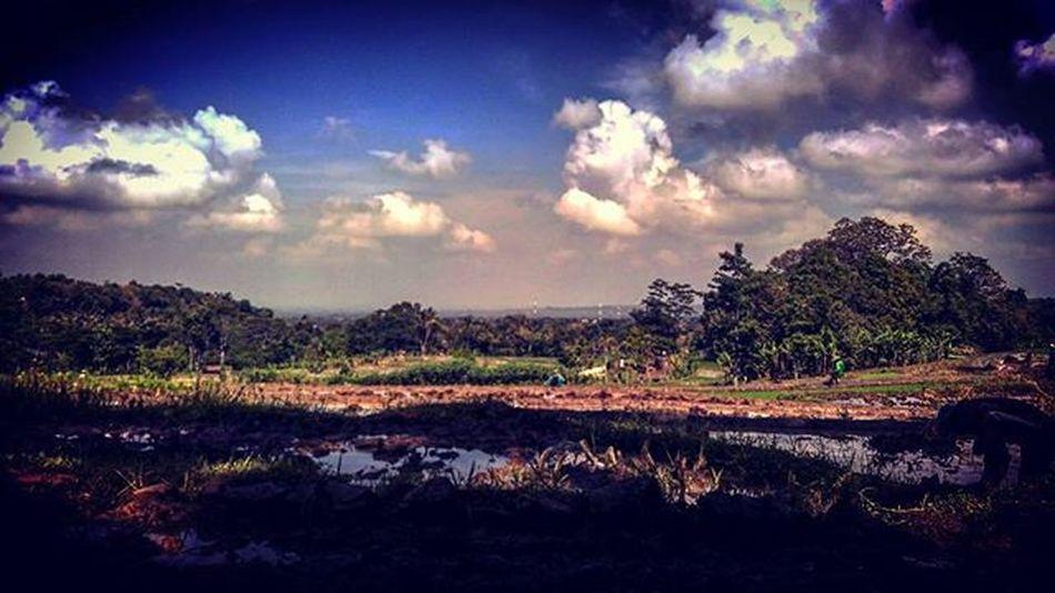 Jalan jalan di desanya ibuk.. Sawah Tandur