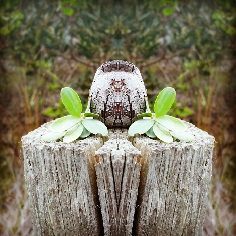 Camera Phone Mirror Photo Mirror Photography Nature Nature No People Outdoors Phonecamera PhonePhotography Plant Wood - Material
