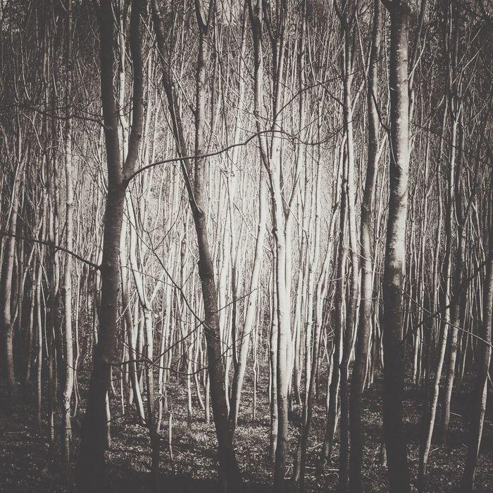 Tree Forest Nature Bare Tree Krajobraz Krajobrazy Bieszczady Bieszczadymountains Landscape