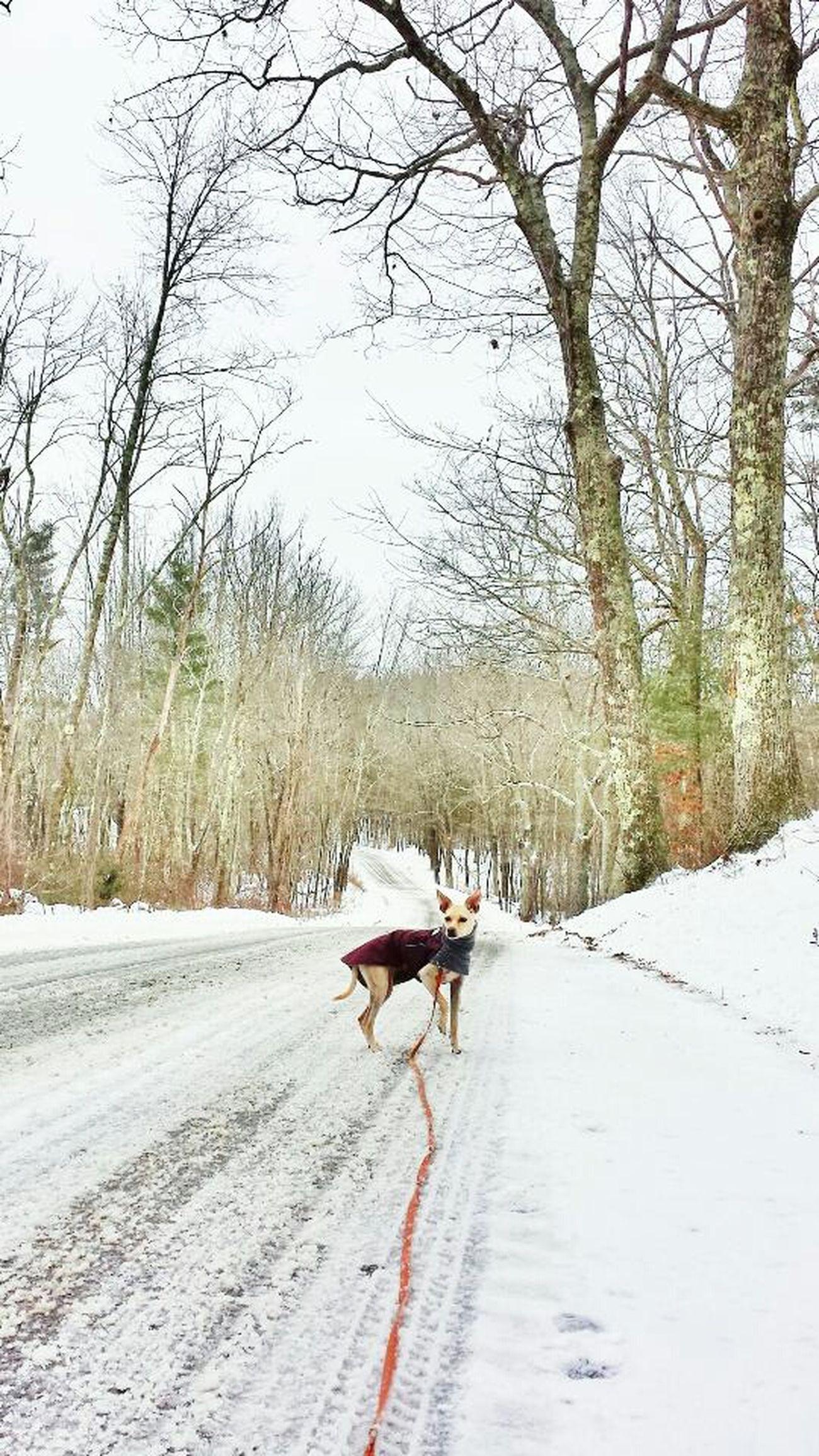 Winter Dog Dog Coat Italiangreyhound