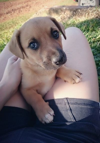 Dog Dog Pets Animal Puppy Domestic Animals One Animal Mammal Purebred Dog Portrait Looking At Camera Young Animal Sitting Labrador Retriever Animal Themes Day Outdoors One Person Adult Close-up Retriever