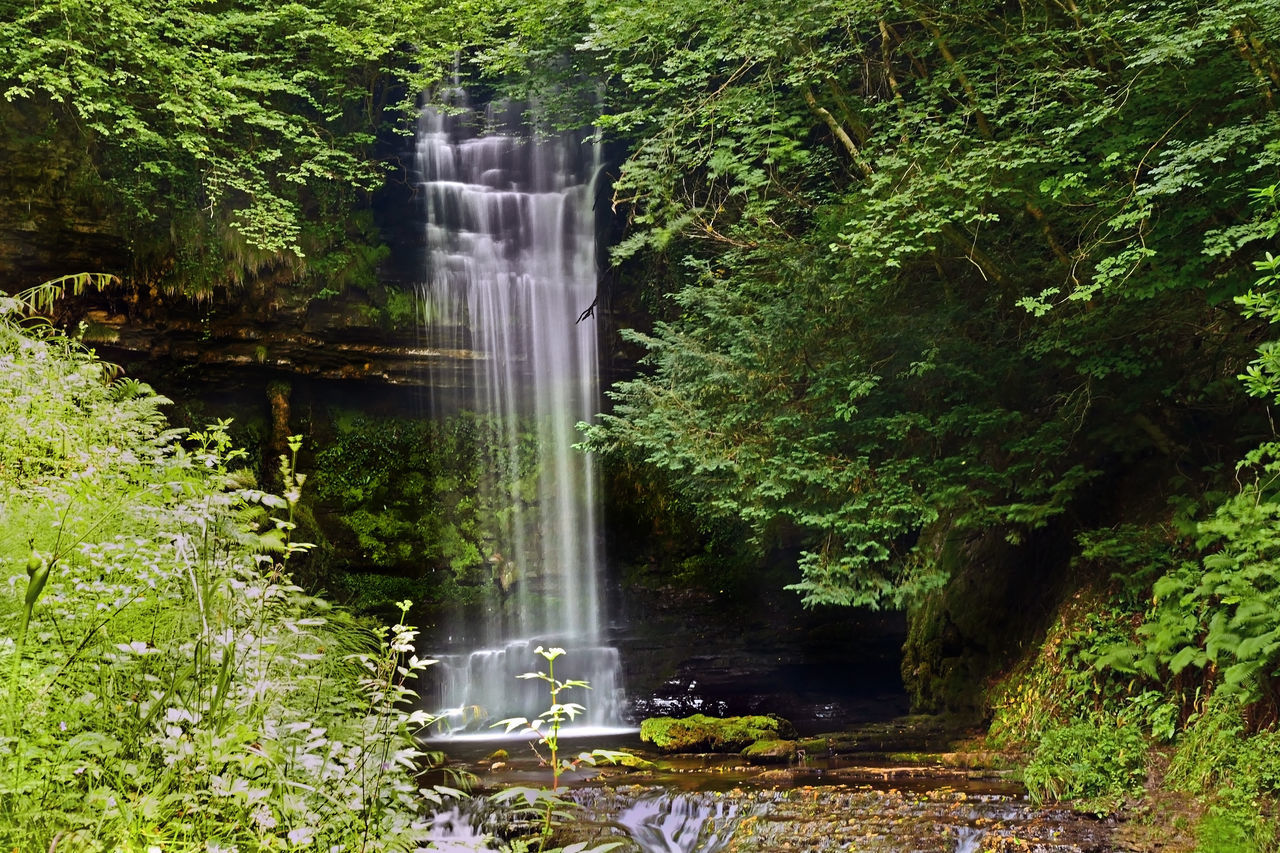 Glencar Waterfall, Co. Leitrim Beauty In Nature Co. Leitrim Day Flowing Flowing Water Forest Glencar Waterfall Grass Green Green Color Growth Idyllic Lush Foliage Motion Nature No People Outdoors Plant Scenics Hidden Gems  Tranquil Scene Tranquility Tree Water Waterfall TCPM Live For The Story The Great Outdoors - 2017 EyeEm Awards