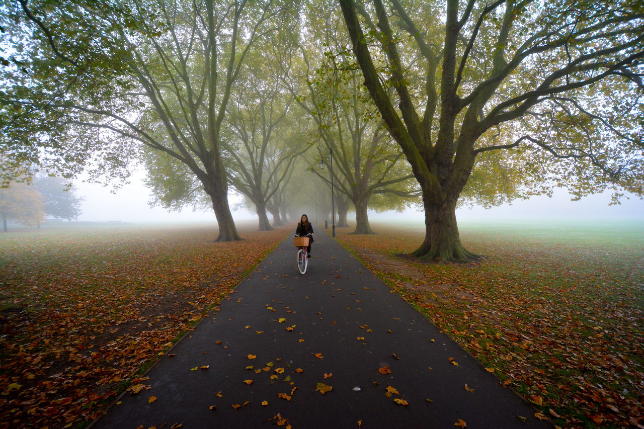 Nature Outdoors Tree Fall Leaves Autumn Colors Autumn Collection Fall Colors Foggy Tree Foggy Landscape Foggy Day Foggy Morning Halloween EyeEm Halloween_Collection Halloween Cambridge Street Cycling City Life Bike Ride Bicycle Citybike Transportation Cityscape Autumn Cambridgeshire