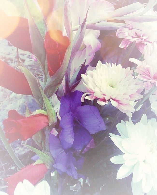 Flowers Bouquet Colors Flower Collection Vignette Blooming Flowers Flowers, Nature And Beauty
