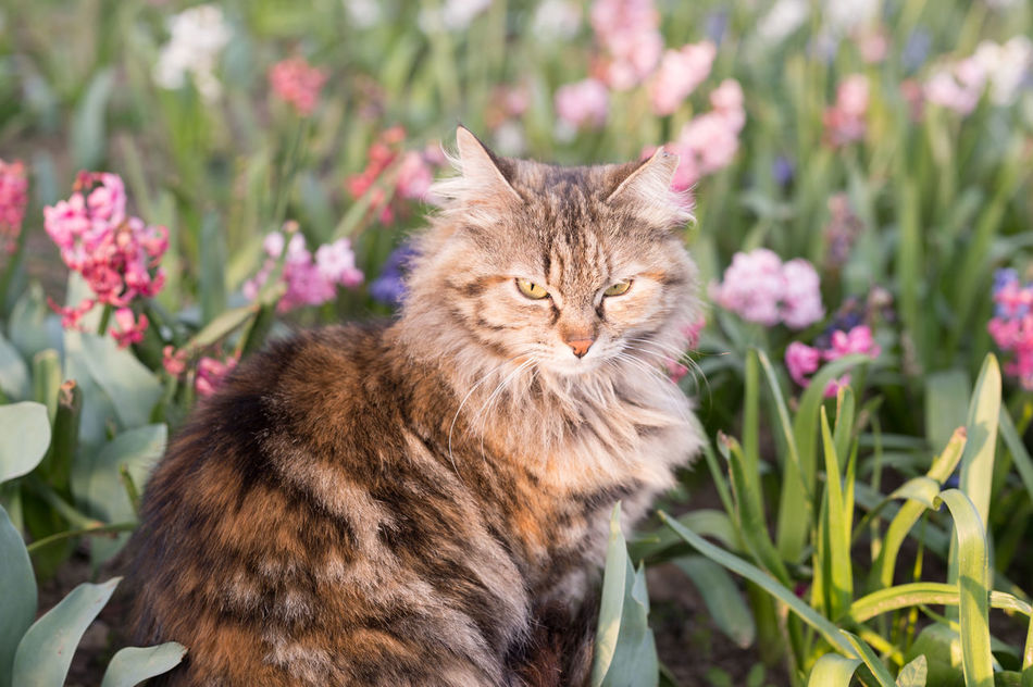 Spring Colors Mugshot II Animal Themes Cat Cats Cat♡ Flower Flowers Fluffy Focus On Foreground Mammal Nature Nature On Your Doorstep Nature Photography Nature_collection Nature_perfection Naturelovers No People One Animal Outdoors Park - Man Made Space Selective Focus Spring Spring Flowers Springtime Stray Cat Warm