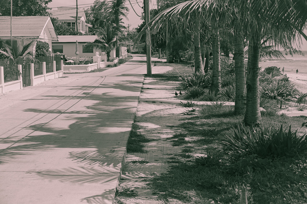Old Alice Town Alice Town Architecture Beachfront Bimini Building Exterior Built Structure Caribbean Coconut Trees Day Growth Islandlife Light And Shadow Nature No People Ocean View Outdoors Palm Tree Photographyisthemuse Seaside Small Town The Bahamas Tranquil Scene Travel Photography Tree