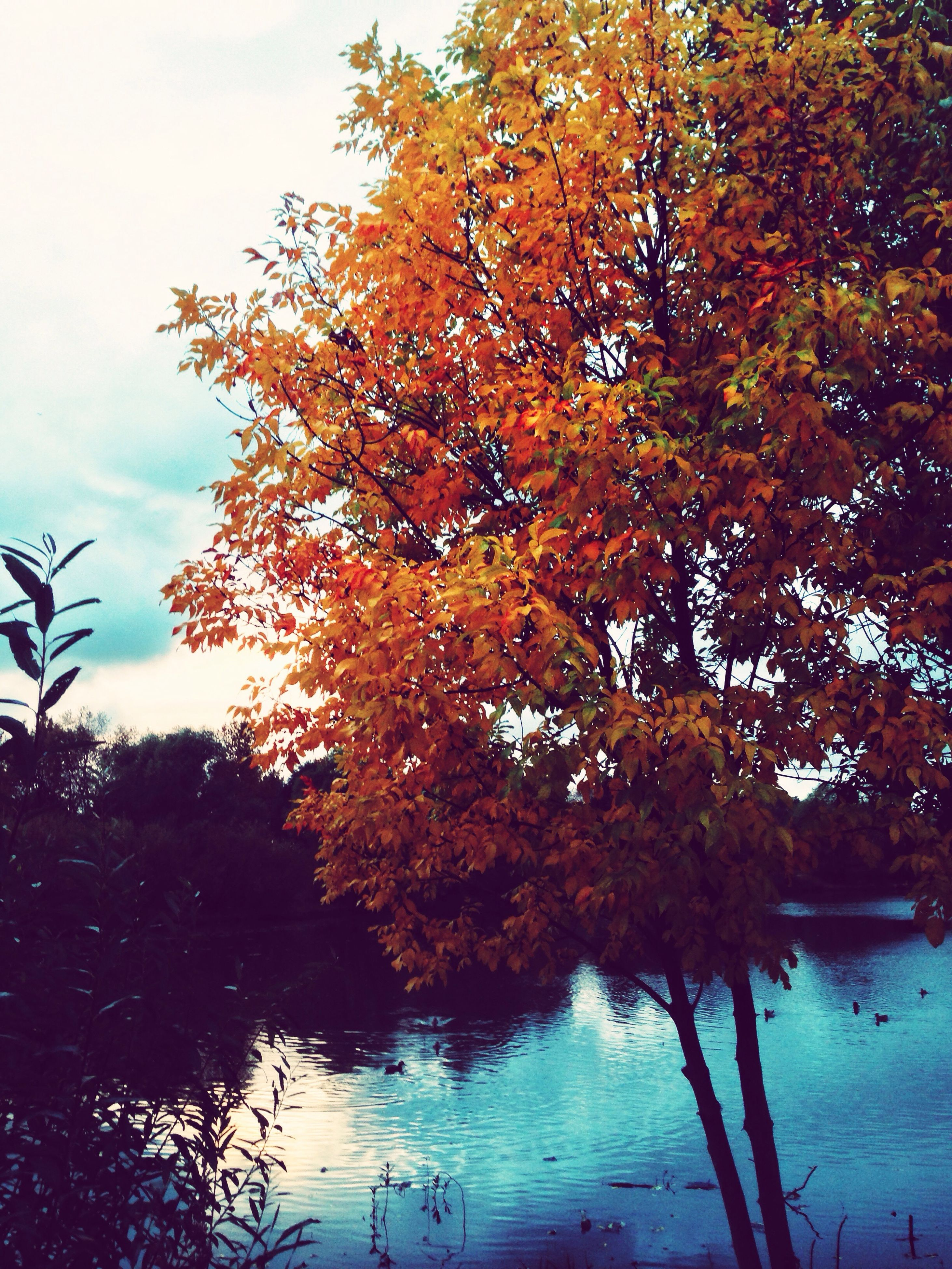 tree, autumn, tranquility, beauty in nature, tranquil scene, change, branch, water, nature, scenics, season, sky, lake, orange color, reflection, growth, idyllic, leaf, outdoors, no people