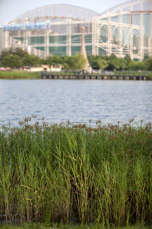 Aquatic Plants Architecture Beauty In Nature Bucheon Lake Park Built Structure Close-up Day Grass Grassy Green Green Color Growing Growth Lakescape Lush Foliage Nature No People Outdoors Plant Scenics Sky Tranquil Scene Tranquility Water