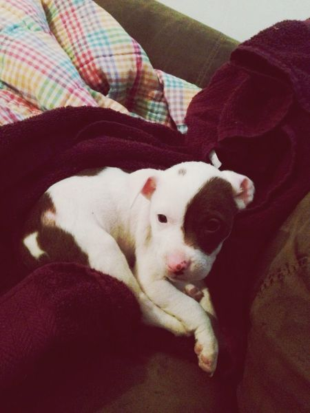 I Love My Dog Cute Pets Pit Bulls My Baby