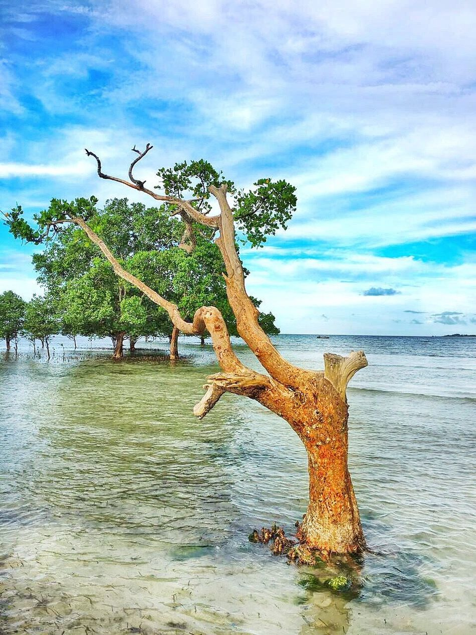Sky Cloud - Sky Tree Water Nature Day Beauty In Nature Sea Horizon Over Water Travel Destinations Eyem Nature Lovers  Photo Beautiful Africa Taking Photos Eye4photography  EyeEm Best Edits Photography Eyemphotography Photographer EyeEm Gallery Sand Beach