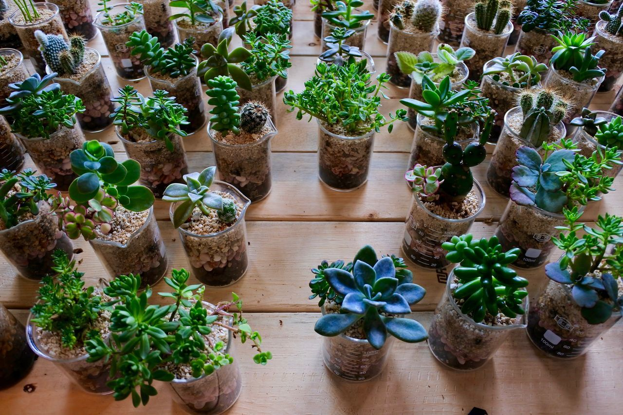 Abundance Arrangement Beakers Cacti Cacti Garden Cactus Cactus Cactus Arrangement Flower Pot Freshness Green Color Growth High Angle View In A Row Leaf Nature Plant Potted Plant Spiky Spiky Plant Spiny Succulent Plant Variation EyeEm Diversity Art Is Everywhere