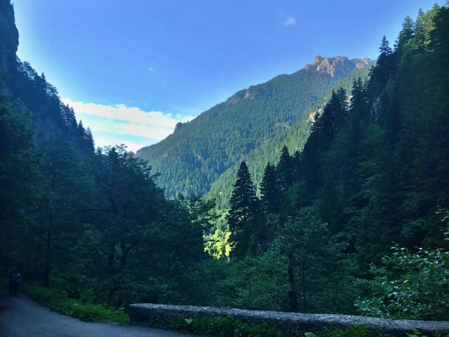 Mountain Beauty In Nature Day River Nature Outdoors Tree Sky Forest Landscape