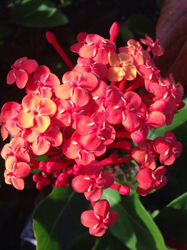 The Purist No Filter No Edit IPhoneography Flowersforfriends Flowerporn