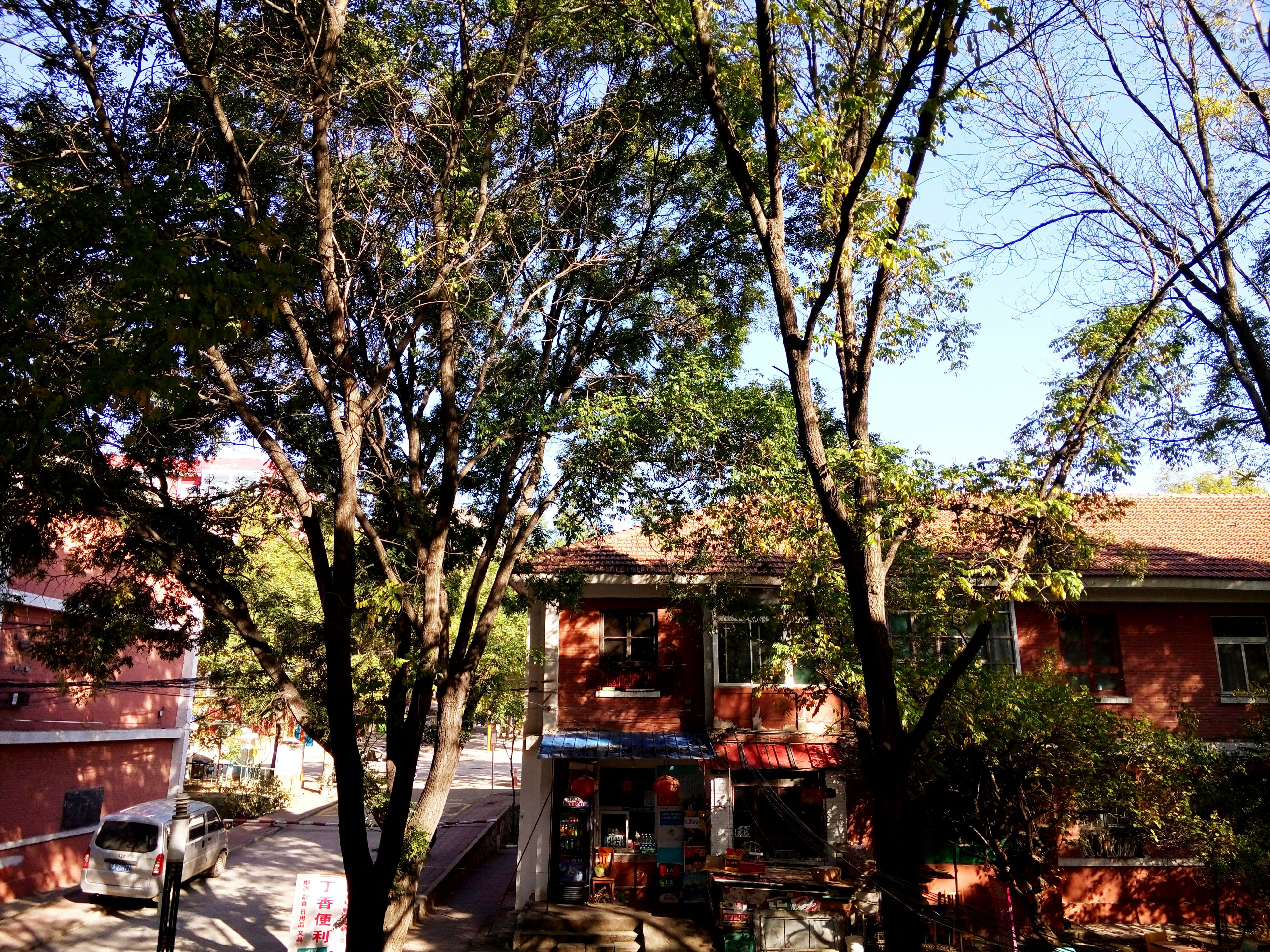 tree, building exterior, built structure, architecture, house, growth, branch, residential structure, residential building, tree trunk, nature, green color, day, plant, clear sky, outdoors, no people, sunlight, sky, lush foliage