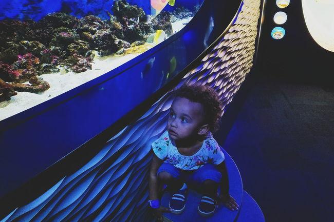 Life Aquatic Toddlerlife Aquarium Bluelight