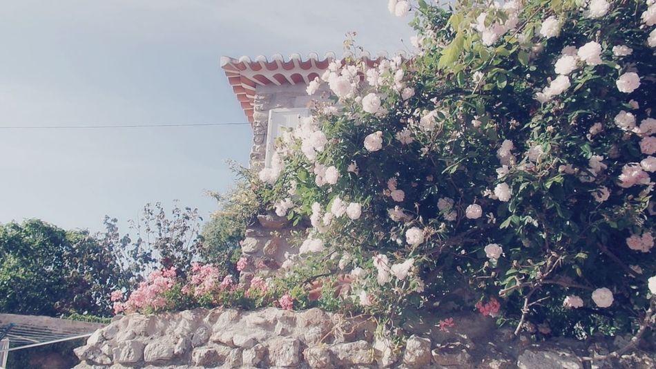 Helping Refugees Welcome Bienvenue Bienvenidos Bem Vindos Benvenuti Getting Inspired Hello World Home Flowers For You  ♥