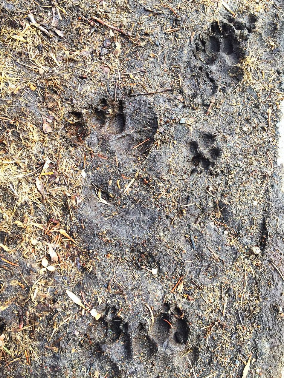 Full Frame High Angle View Nature No People Outdoors Sand Dirt Traces Dog Paws Seeds Feet Animal Wild Wilderness Tracking Fresh Following In The Forest In The Tracks