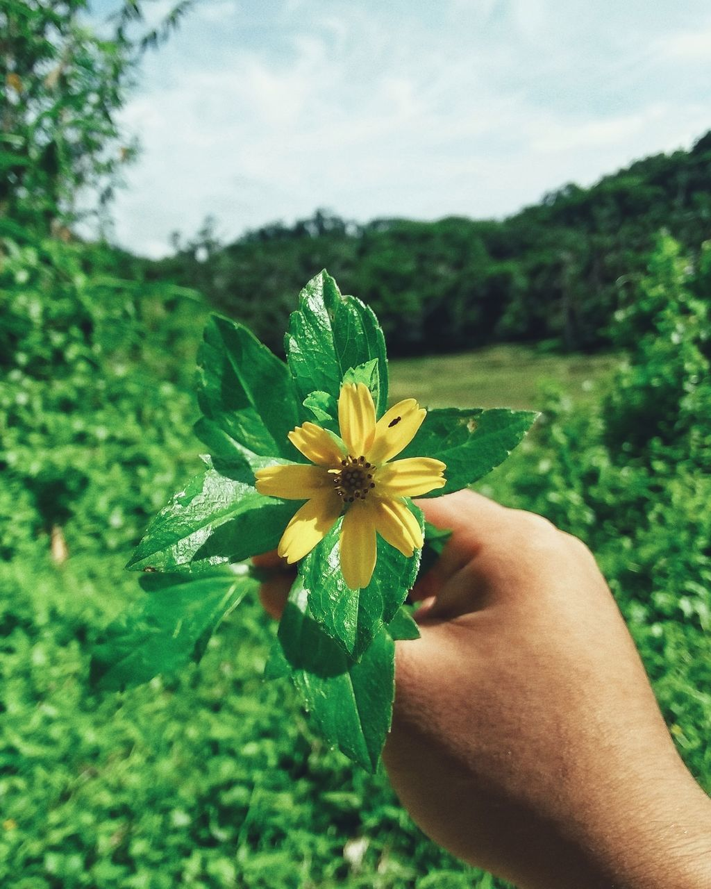 flower, human hand, human body part, nature, real people, beauty in nature, fragility, one person, petal, freshness, holding, outdoors, day, flower head, green color, yellow, close-up, plant, growth, lifestyles, sky, people
