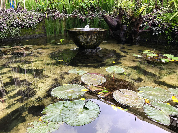 Bali, Indonesia Fountain Pond Day Lotus Leaves No People Outdoors Water
