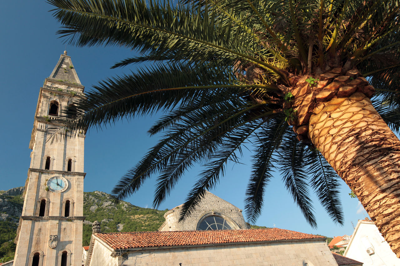 Low angle view of palm tree and clock tower