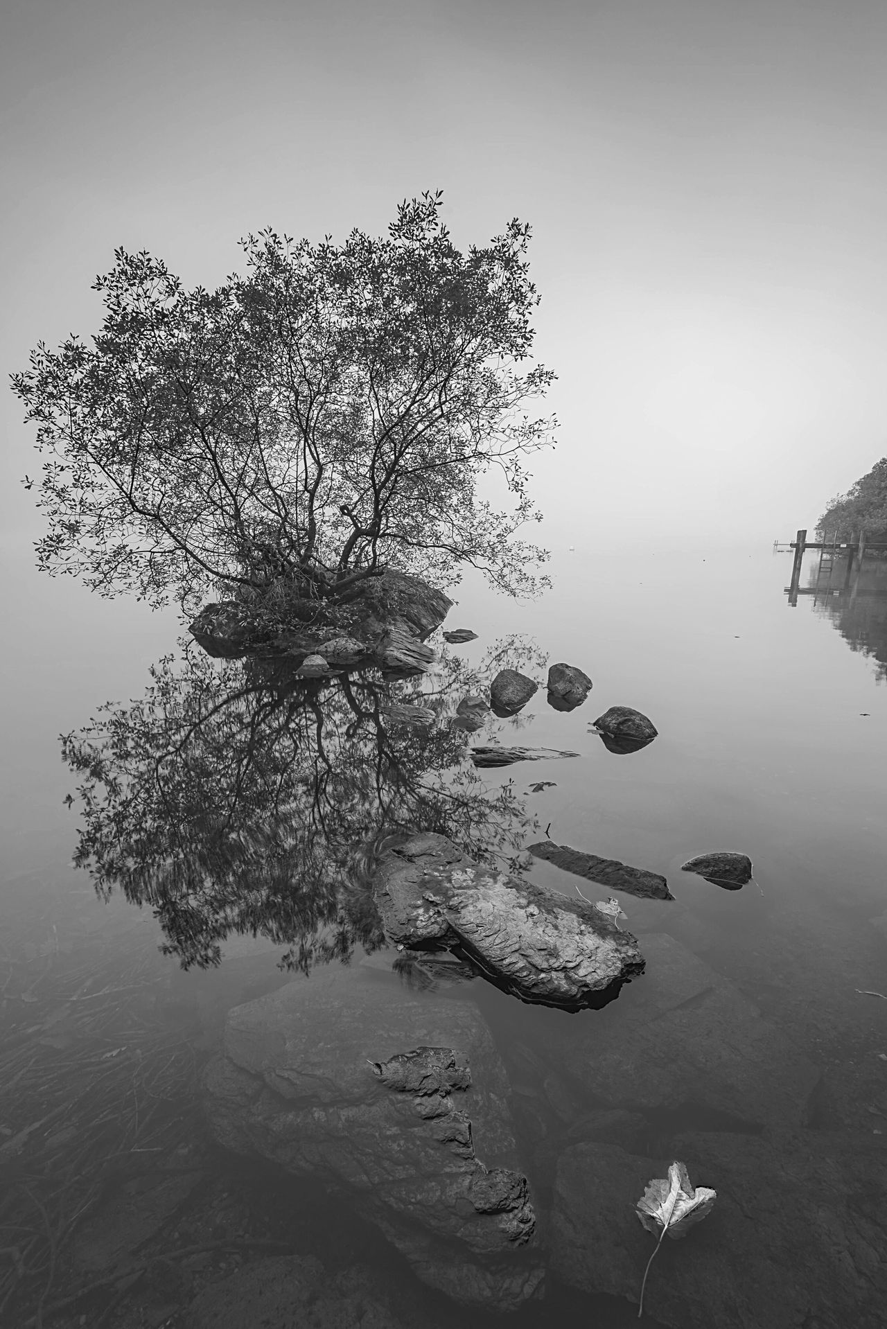 One Tree Scenics Beauty In Nature Beauty In Nature Landscape_Collection Long Exposure Lake View Lonely Tree Naturelovers Lake District Cumbria Windermere Reflection Foggy Misty BW Collection Tranquil Scene Monochrome TreePorn Tree_collection  Travel Destinations Water_collection Idyllic