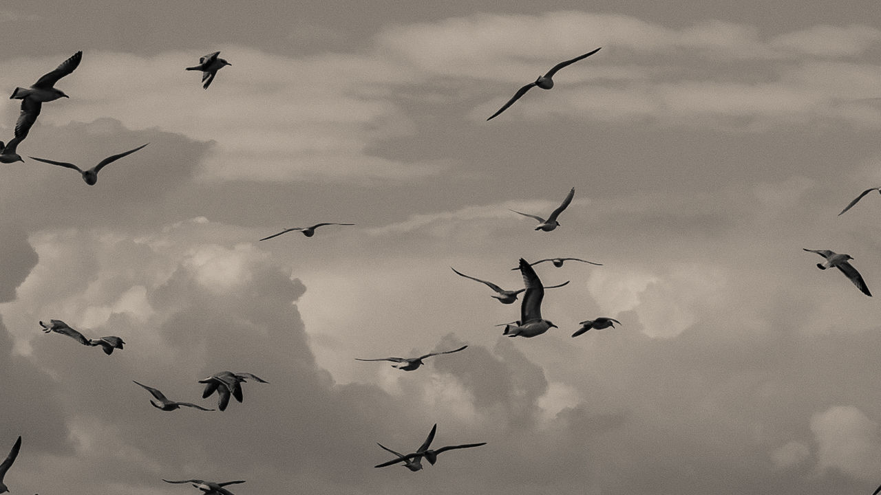 micropic Animal Themes Animal Wildlife Beauty In Nature Bird Cloud - Sky Day Flock Of Birds Flying Freedom Low Angle View Mid-air Migrating Motion Nature No People Outdoors Sky Spread Wings