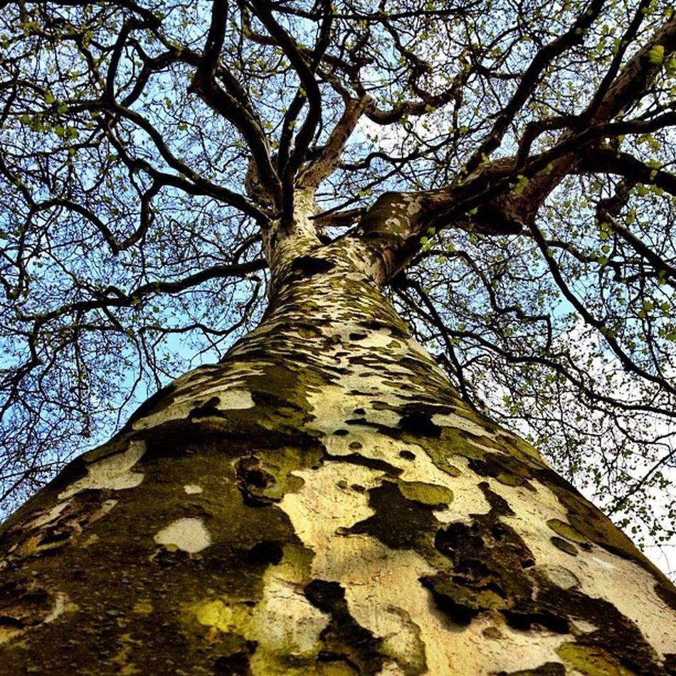 Beautiful #tree in #keukenhof #holland #ubiquography #jj_forum #jj #dutch #garden #park #flower Garden Flower Holland Tree Park Dutch Jj  Keukenhof Jj_forum Ubiquography