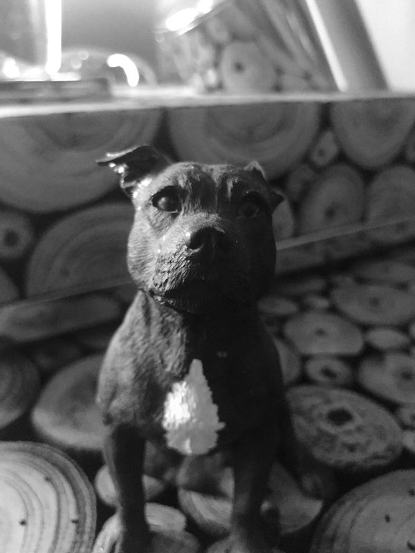 A Small Dog First Eyeem Photo Live For The Story