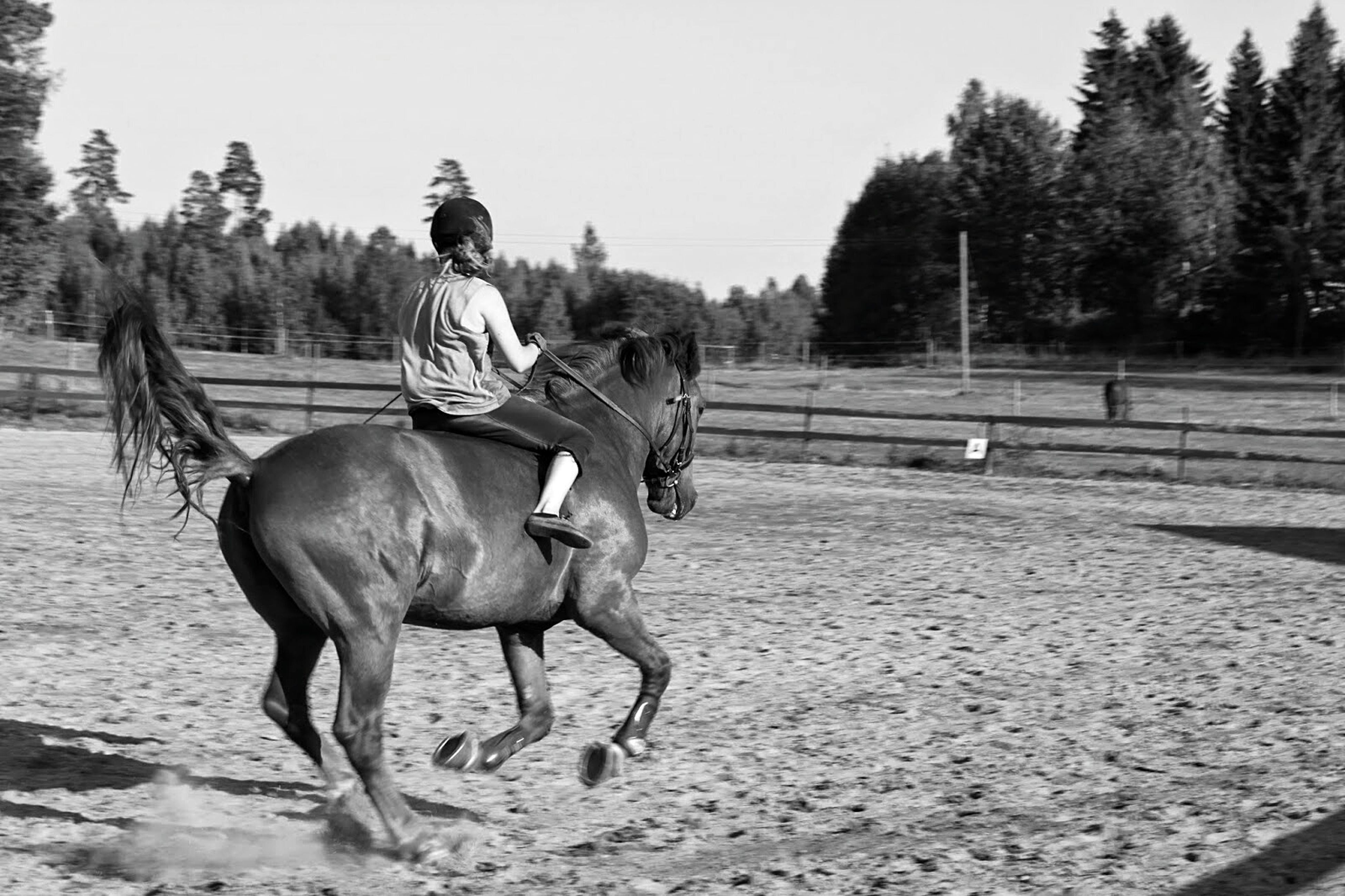 animal themes, horse, domestic animals, mammal, working animal, tree, one animal, full length, livestock, transportation, riding, two animals, herbivorous, standing, road, clear sky, day, on the move, walking, sunlight
