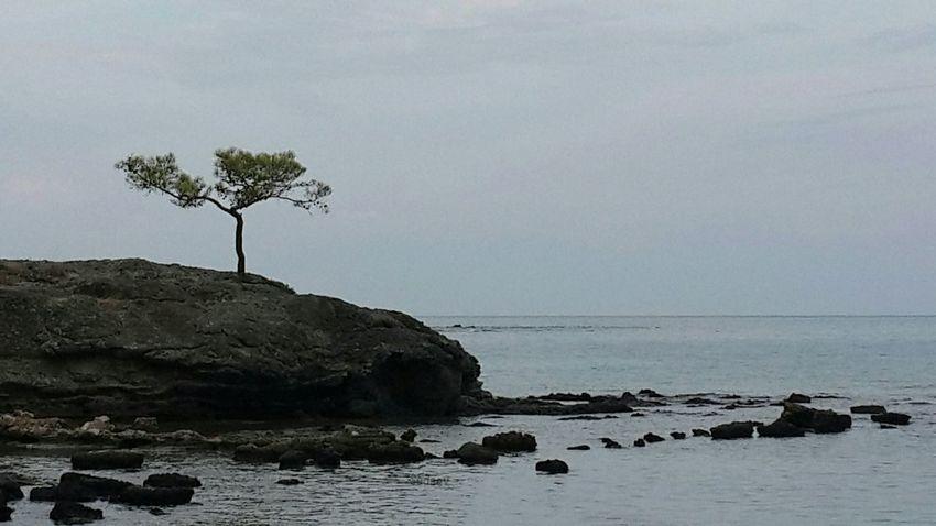 Tek başına... Eye4photography  Nature Landscape Ineedamiracleformylostsoul EyeEm Nature Lover EyeEm Best Shots Sea And Sky Hugging A Tree Mothernature
