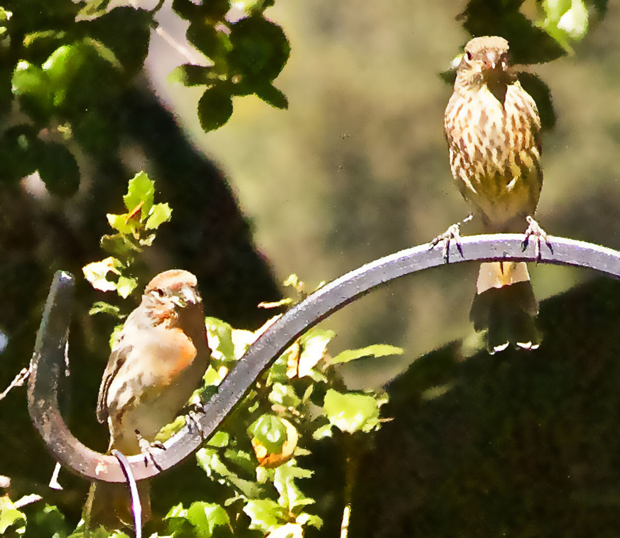 Bird Bird Series Finches No People Outdoors Perching Resting Birds Sunlight