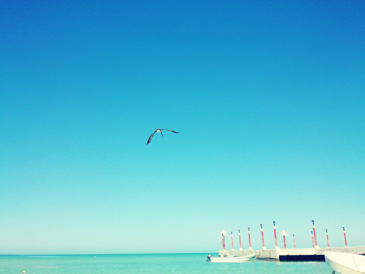 Hunting at Sisal. Yucatan Mexico Birds And Blue Sky Birds🐦⛅ Birds In Flight Birds Flying Birds Beauty In Nature Blue Sky No People Nature Amazing Day Xperia ZL Mobile Photography Landscape Hunting Bird Animals Seascape Sea And Sky Beach Photography Beach Puerto Sisal Boats⛵️ Betterlandscapes