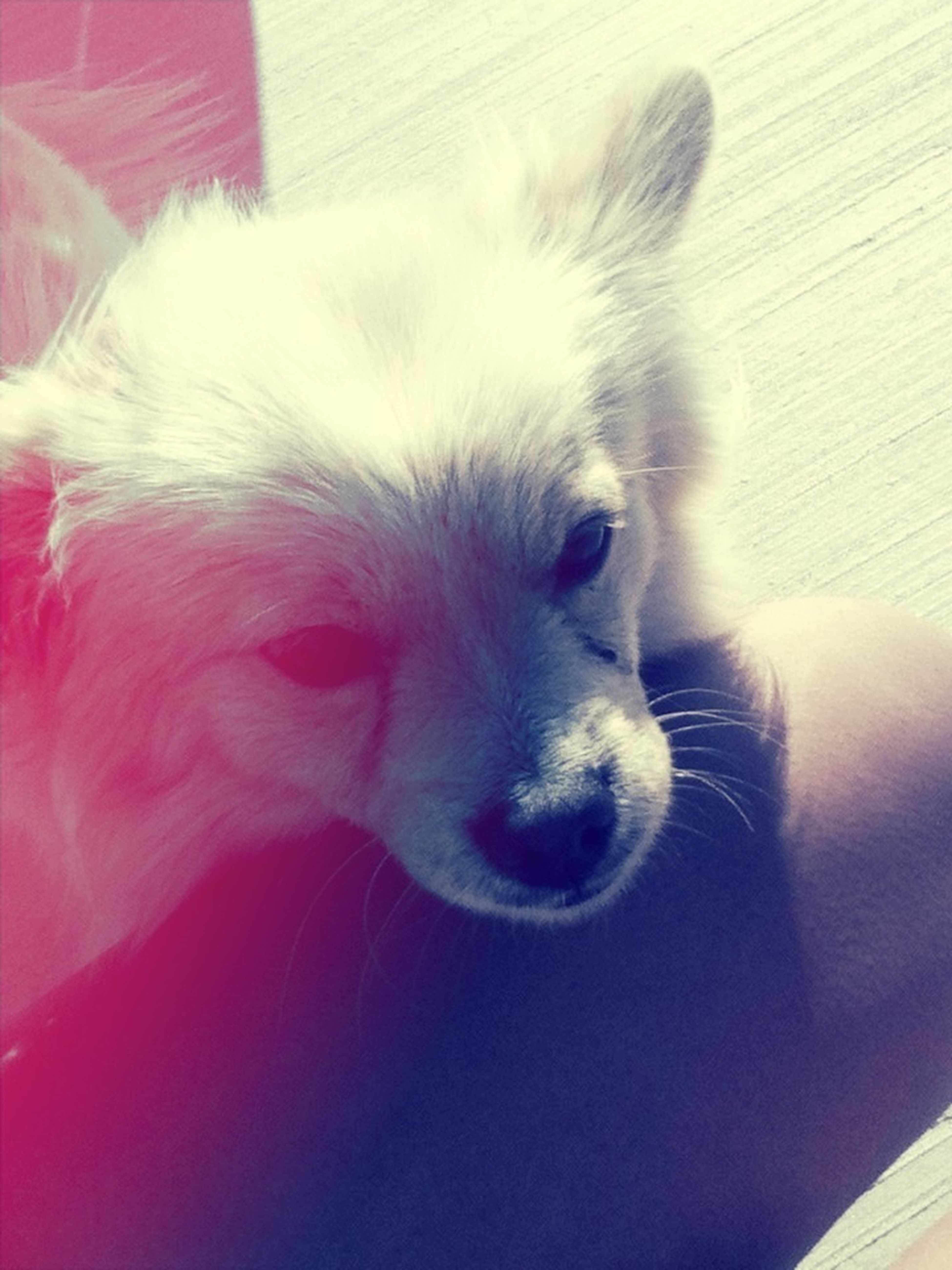 This dog made my day he's name is bego lol ^.^