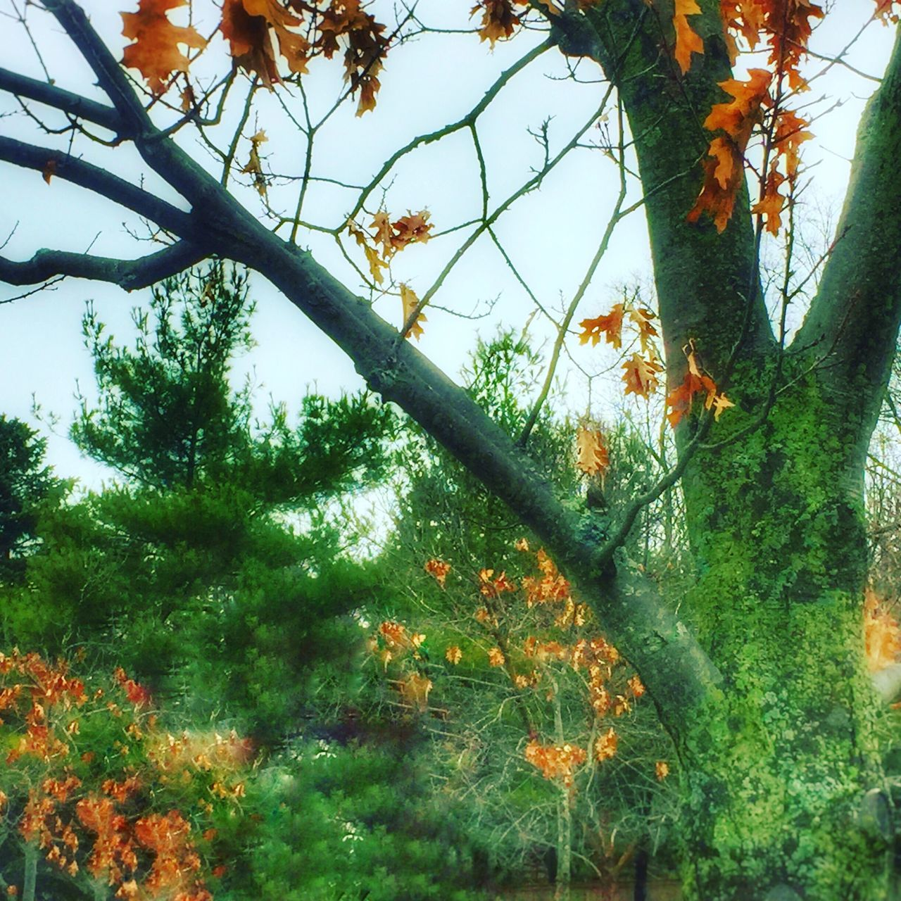 Tree Growth Nature Low Angle View No People Beauty In Nature Day Tranquility Outdoors Sky Branch Close-up Animal Themes Nature Leaf Green Orange Color Leaves Tree Autumn Green Color Warm Colors Filter Beauty In Nature Fall