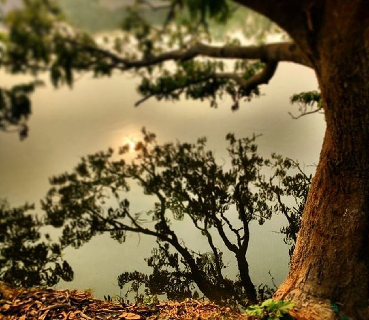 tree, tree trunk, nature, branch, no people, outdoors, scenics, tranquil scene, beauty in nature, growth, tranquility, day, sky, close-up