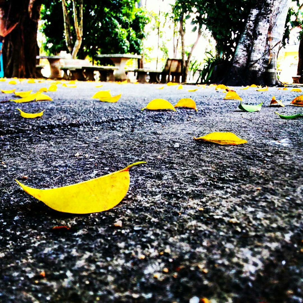 yellow, outdoors, leaf, day, tree, street, nature, no people, fragility, road, tree trunk, close-up, beauty in nature, freshness
