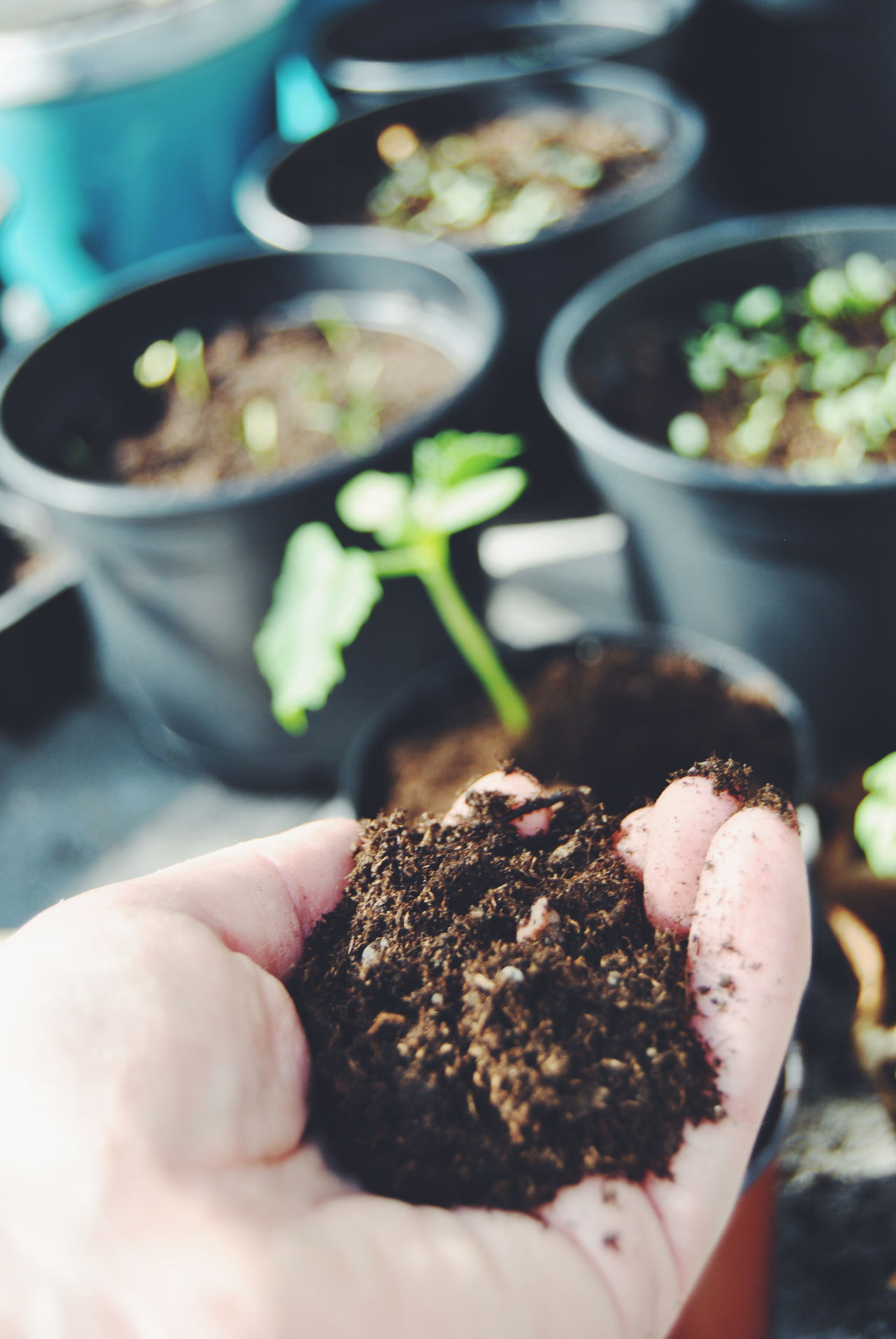 Beginning Close-up Directly Above Food Freshness Growth Healthy Eating Healthy Lifestyle High Angle View Indoors  Preparation  Spring Start Variation Beginnings Beginning Of Life  Beginning Of Spring Seeds Seed Of Life Soil Working Hands Greenhouse Planting Planting Seeds Hand