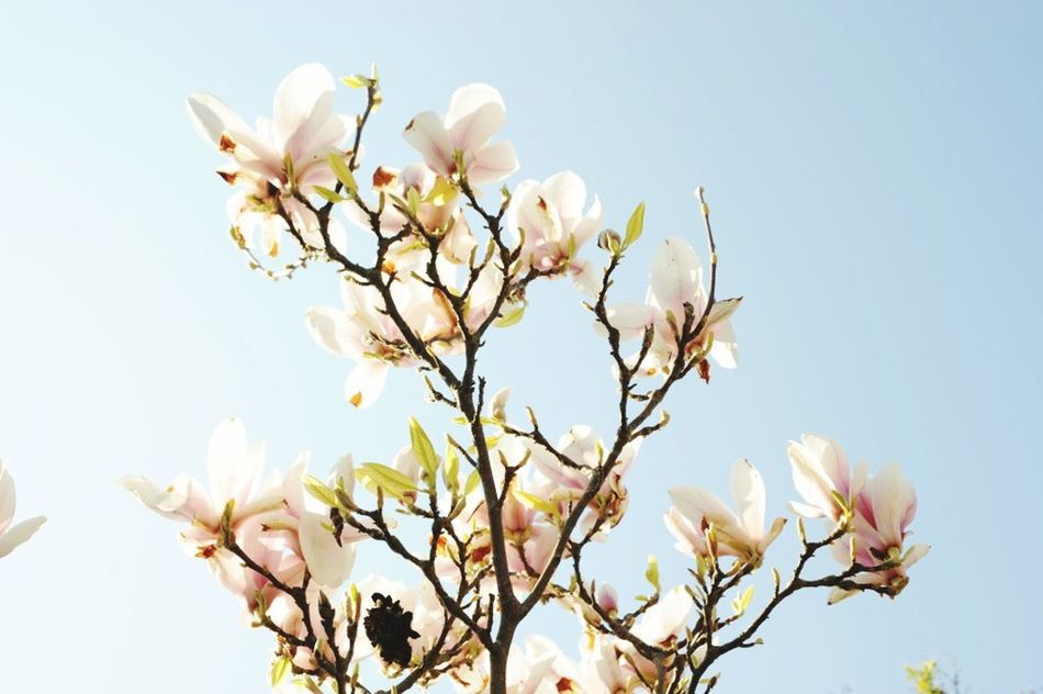 Beautiful stock photos of magnolia, NULL