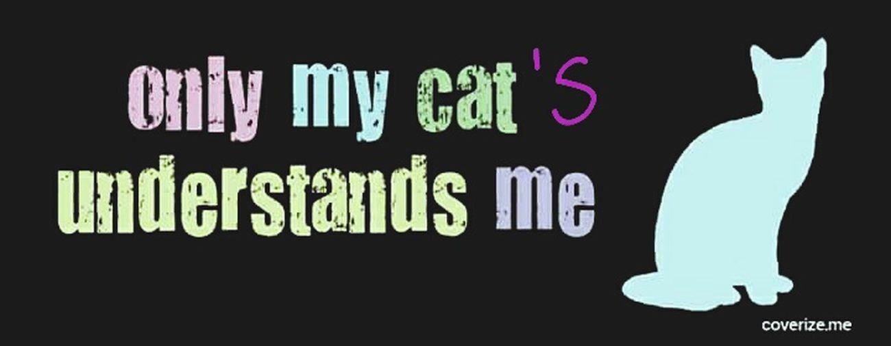 My Lovely Sphynx Canadiansphynx Sphynx Cat Sphynxismyworld Hairlesscat Sphynxportrait My Little Monster Gremlins Nakedcat