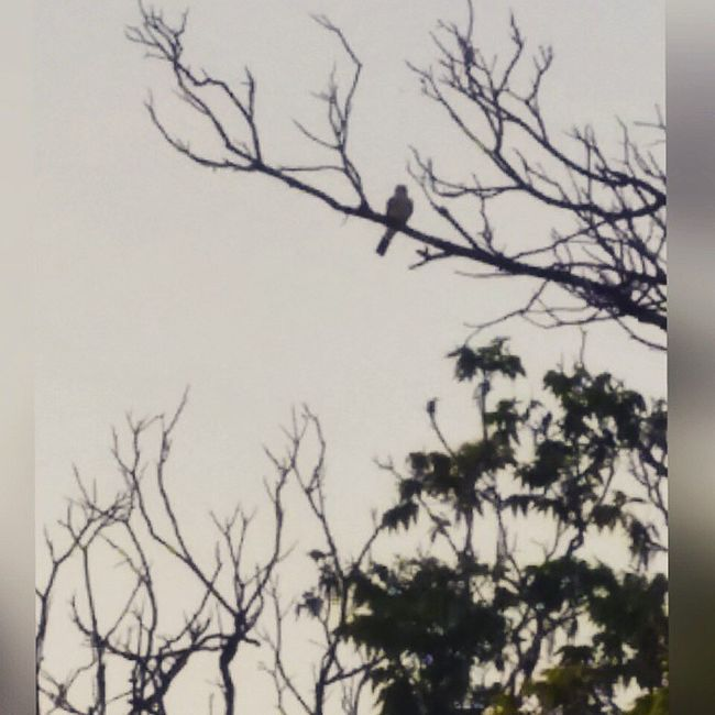 Backyardbirds 🐦 Random Birdlooking