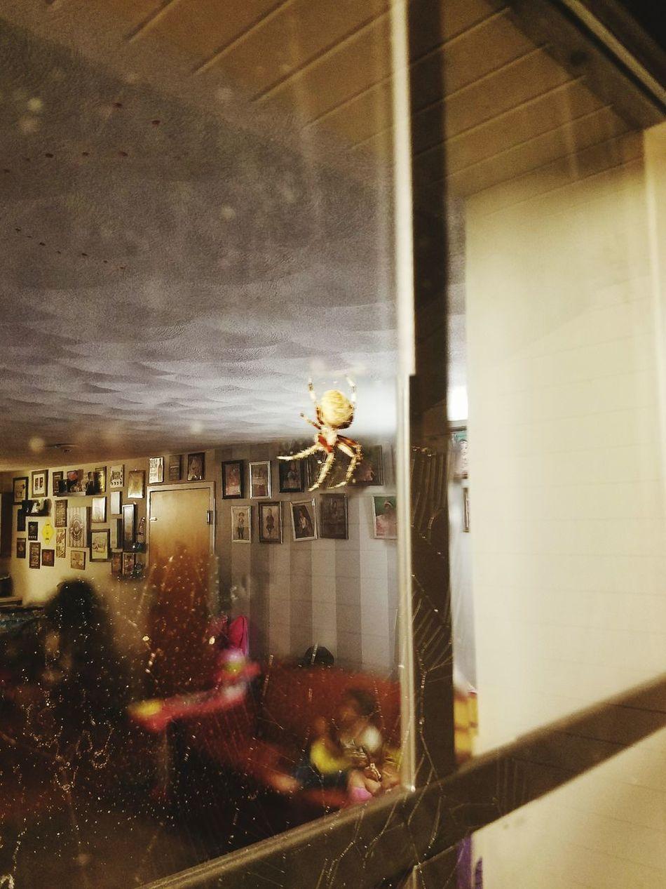 Websta Spider Nature_collection Eyenaturelover Spider Spider's Web ThePastHaunts