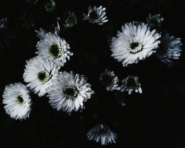 Flower Nature Fragility Beauty In Nature Growth No People Flower Head Outdoors Close-up Black Background Day Flowers Nature First Eyeem Photo Beauty In Nature Plant VSCO Vscocam Vscogood Vscofeature