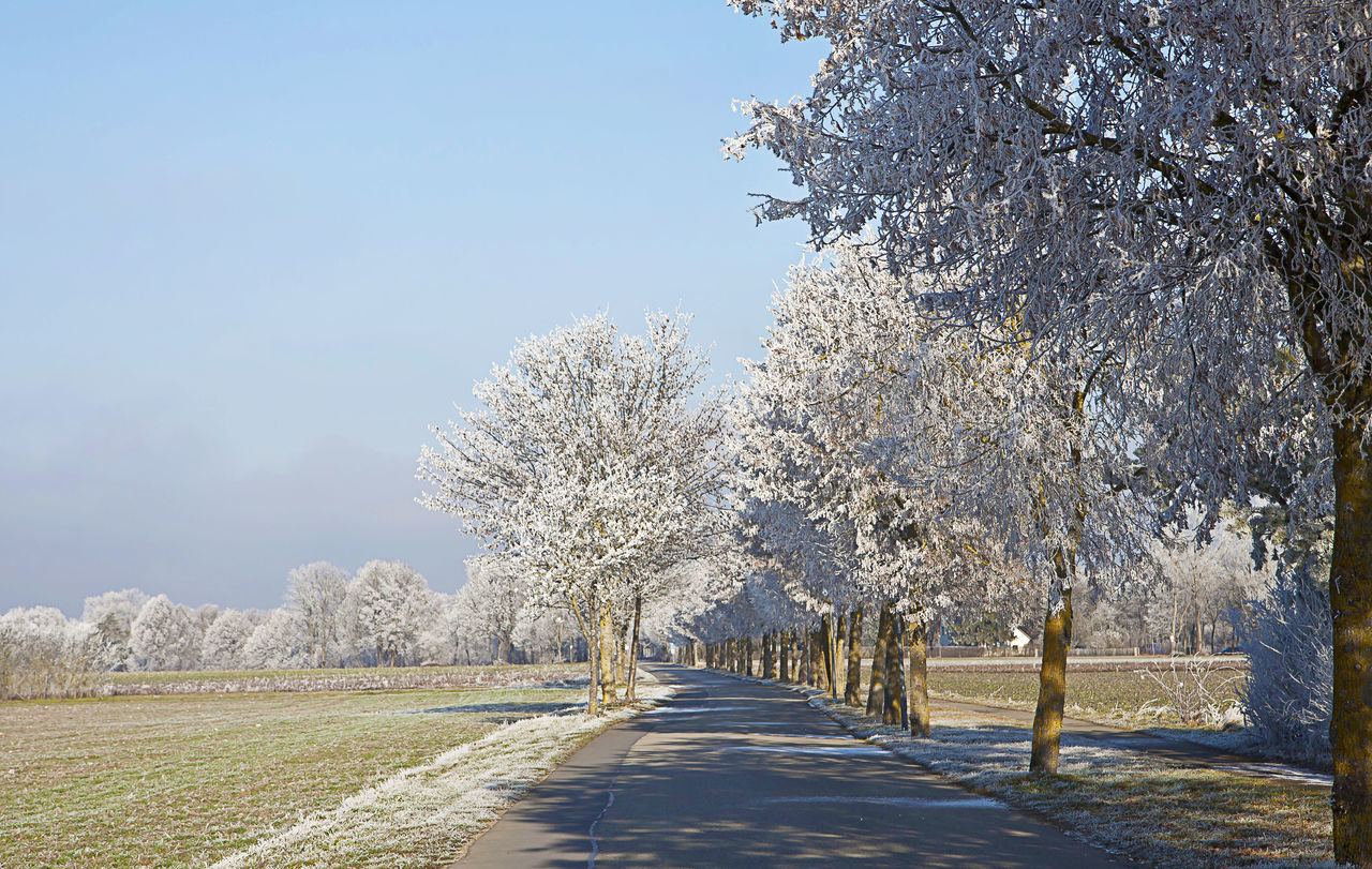 Bavarian winter landscape, beautiful view of rural alley flanked by frosted trees in a sunny day of december Beauty In Nature Blue Sky Climate Countryside Day Frost Frozen Trees Ice Landscape Nature No People Outdoors Road Rural Scene Sky Snow Sunny Day Tree White Winter