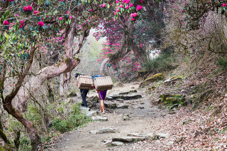Hiking Scenic View Annapurnacircuit Nature Mountain Annapurna Nepal Beauty In Nature Annapurna Base Camp Trek Springtime Rhodendron Leisure Activity People Flower Porter
