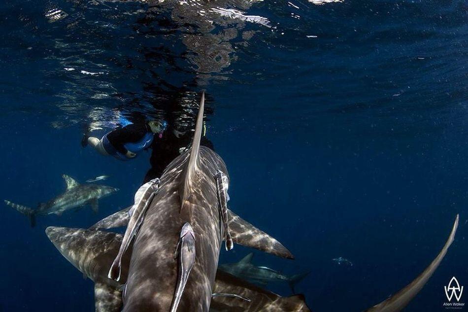 Sub scuba Nature plongeon