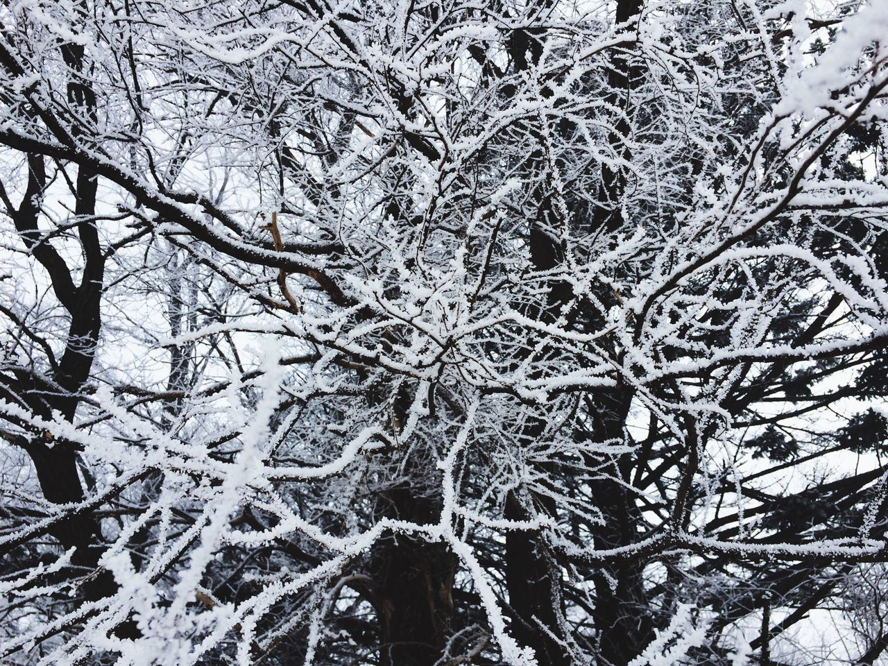 winter, snow, cold temperature, branch, tree, nature, outdoors, no people, beauty in nature, bare tree, day, low angle view, close-up