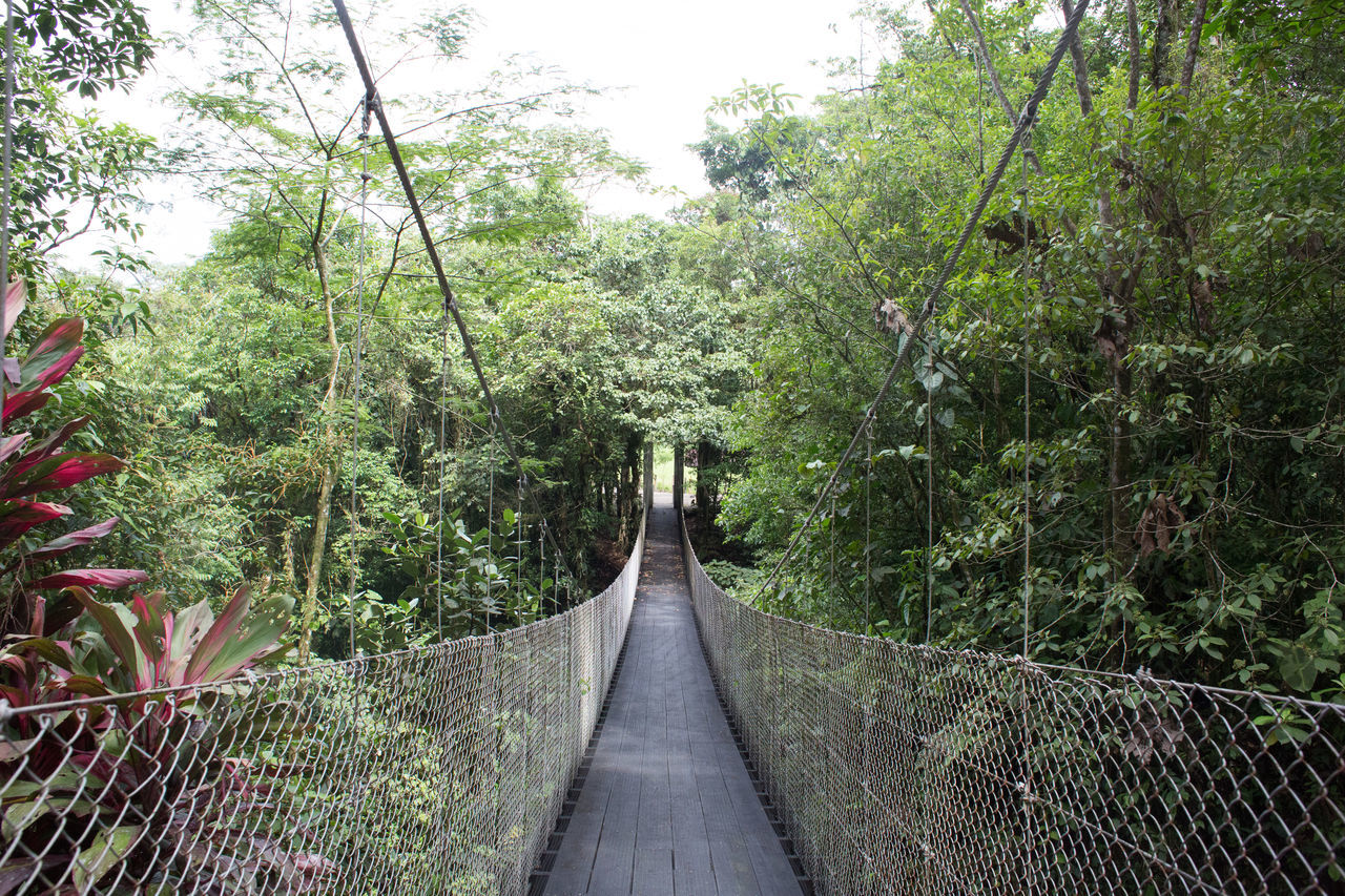 tree, railing, growth, the way forward, nature, footbridge, outdoors, day, forest, no people, beauty in nature, foliage
