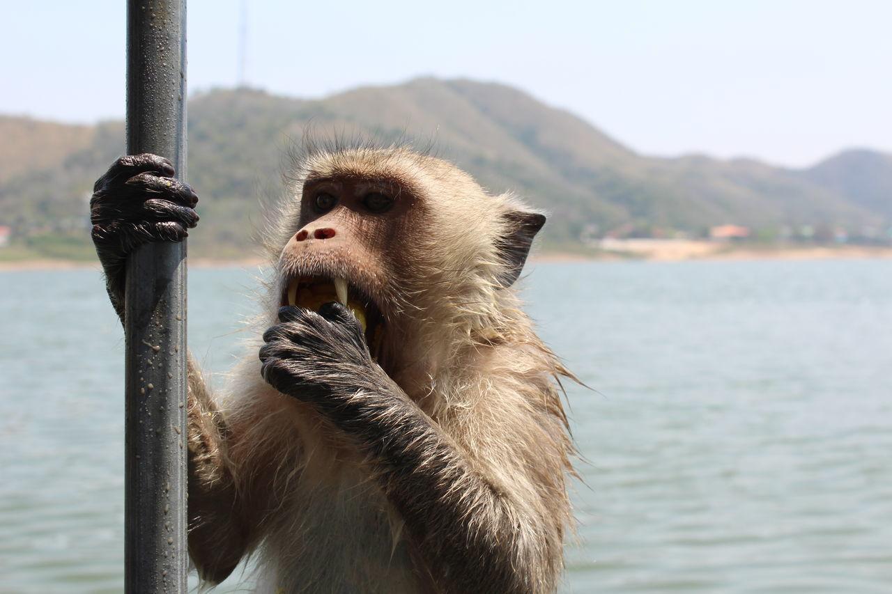 Beautiful stock photos of affe, Animal Teeth, Animal Themes, Animal Wildlife, Animals In The Wild