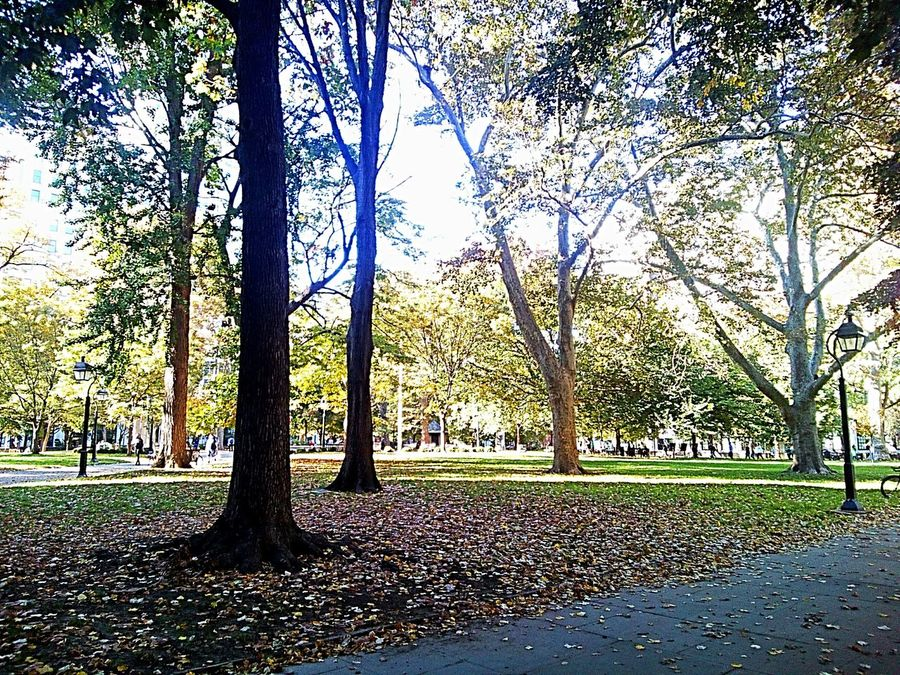 Tree Growth Scenics Outdoors Beauty In Nature Tranquility Park Man Made Landscape Trees